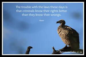 Legal Quote 4